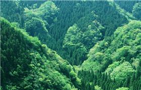 森林防雷预警
